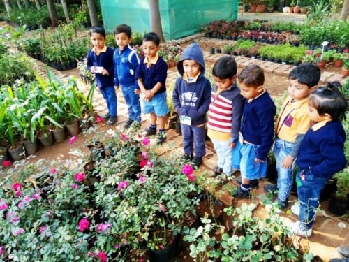 View the album Field Trip to Plant Nursery for classes Nursery & LKG